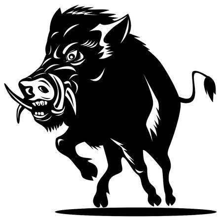 wildschwein: Wildschwein Illustration