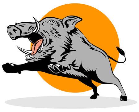 eber: Wild Pig  Illustration