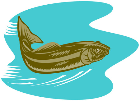 Trout Stock Vector - 3254438