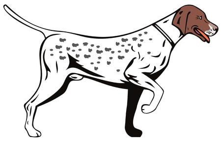 Aanwijzer hond