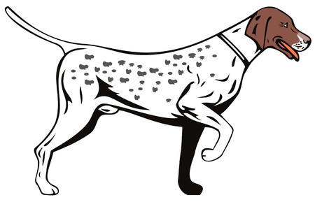 hunting dog: Pointer dog