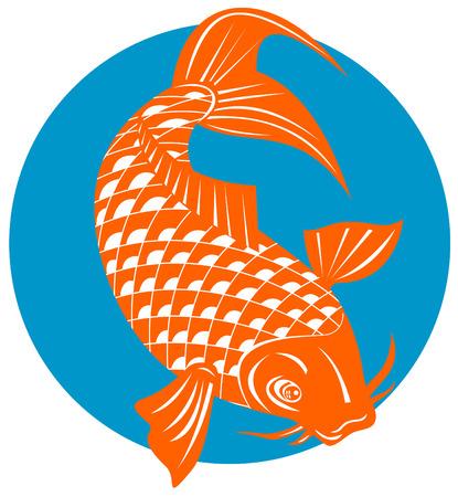 Carpa Koi  Ilustración de vector