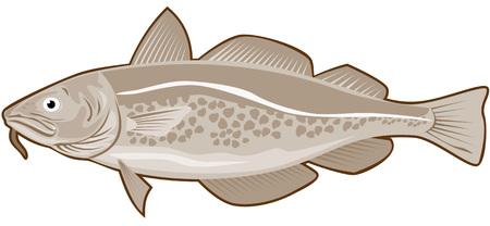 tail fin: Bacalao  Vectores