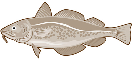cod: Codfish Illustration