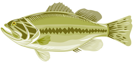 largemouth bass: Largemouth bajo Vectores