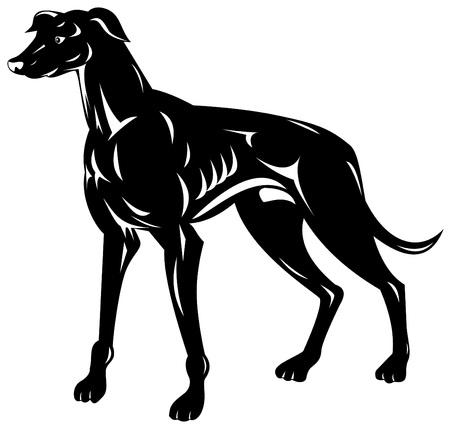 chart: Greyhound Ilustracja