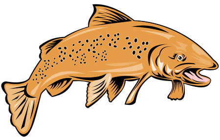 Trout Stock Vector - 3624122