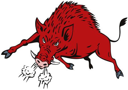 jabali: Cerdos salvajes Vectores