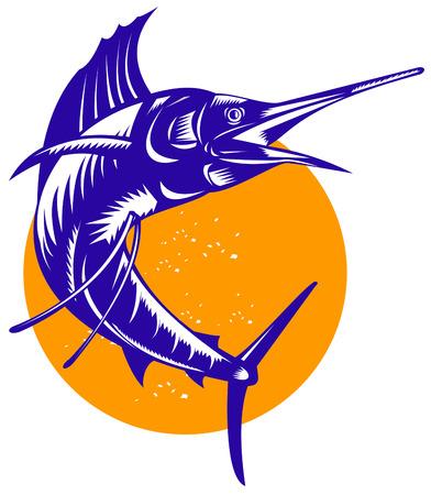 sailfish: Pesce spada Vettoriali