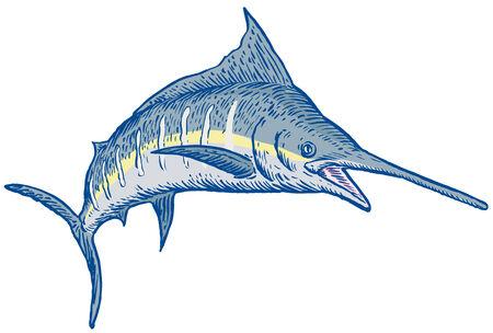 pez vela: Pez vela Vectores