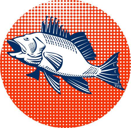 sea bass: Sea Bass