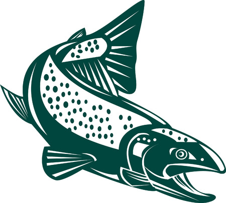 trout Stock Vector - 3888005