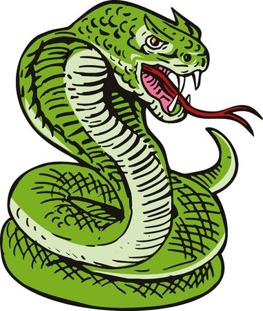 king cobra:  King Cobra