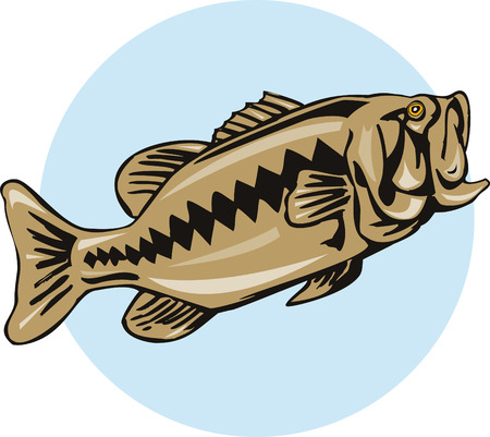fullbody: Largemouth bajo Vectores