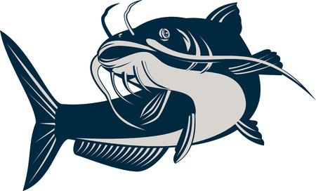 catfish: Bagre Vectores