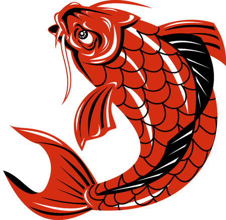 Koi carp fish Vector
