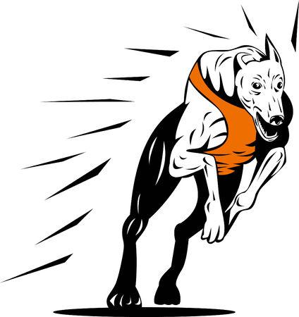 Greyhound racing Vector