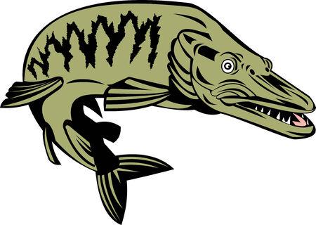 fullbody: Muskie pescado Vectores