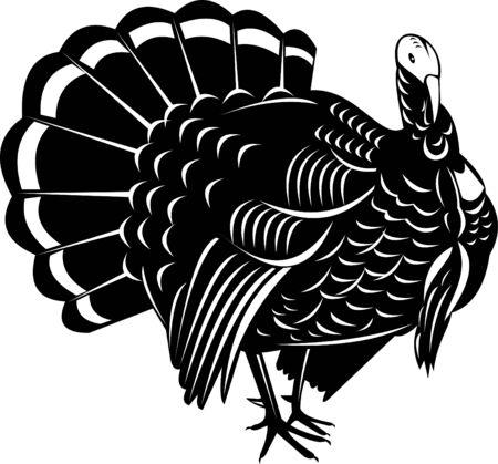 Wild Turkey Illustration