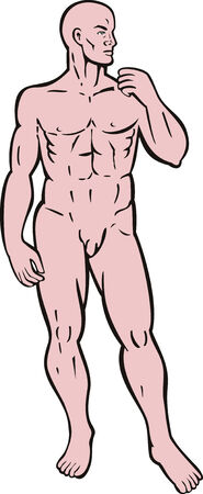 muscular men: Human anatomy Illustration