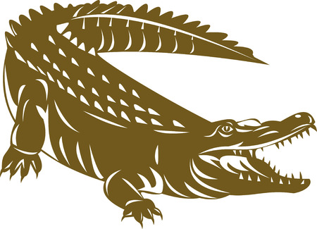 caiman: Crocodile