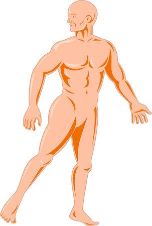man full body: Human anatomy Illustration