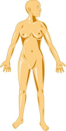 frau ganzk�rper: Weibliche menschliche Anatomie