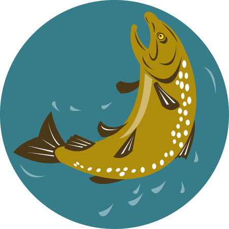 Speckled trout jumping Stock Vector - 4969204