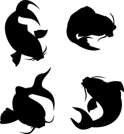 catfish: La carpa koi silueta