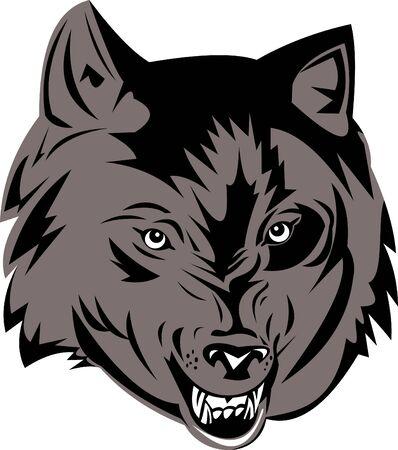 growling: Grey wolf