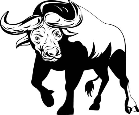 Attacking African Buffalo Vector