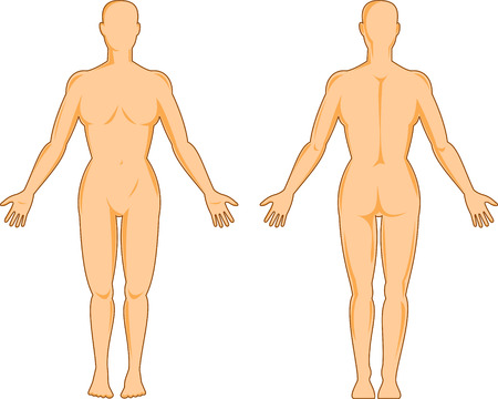 front back: Female Human anatomy front and back