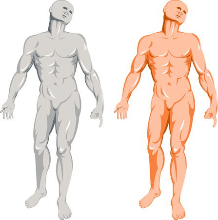 arm muscles: Human anatomy Illustration