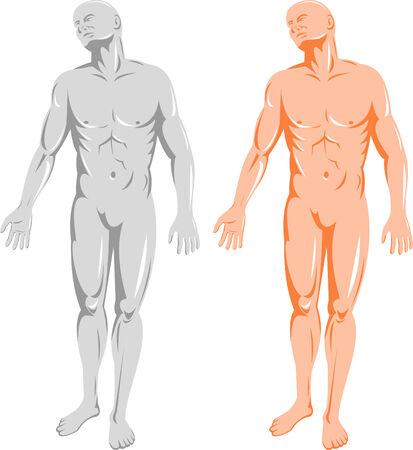 Human anatomy front Vector