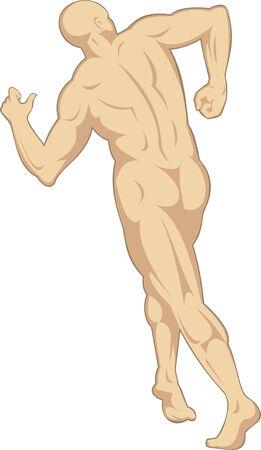 fullbody: Anatom�a humana