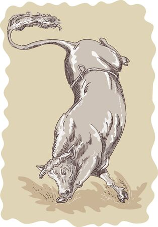Illustration of a bucking bull done in sketch style Stock Illustration - 5741217