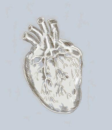 Human heart Stock Photo - 5945044
