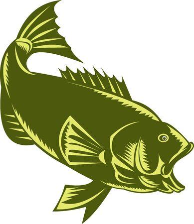 largemouth bass: Bass Micropterus estilo de grabado