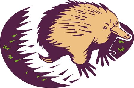 echidna: illustration of a spiny anteater or echidna