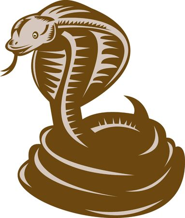 wildlife: illustration of a king cobra coiled about to strike