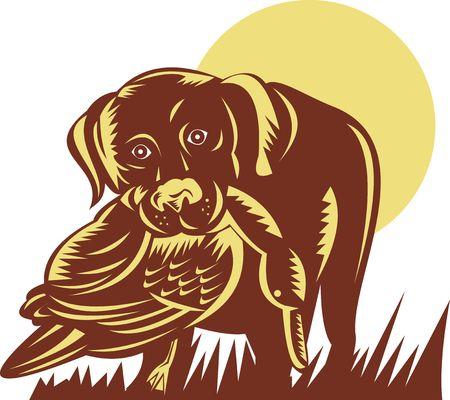 gun dog: illustration of a trained gun dog retrieving a duck