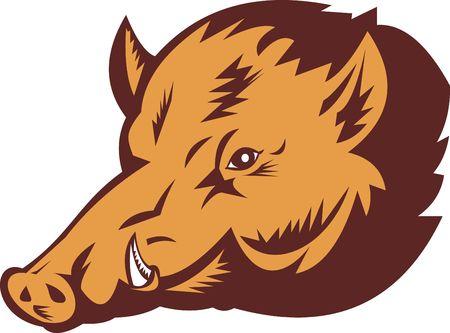 jabali: Ilustraci�n de un cerdo silvestre hecho con estilo de grabado  Foto de archivo