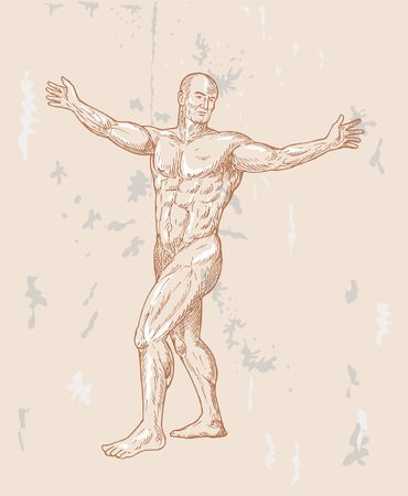 hand sketched illustration of the male human anatomy done in renaissance style. illustration