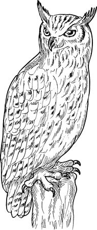 hand sketch drawing illustration of an Eagle Owl done in black and white. illustration