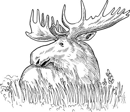 moose: hand sketched drawing  illustration of a moose or common European elk done in black and white. Stock Photo
