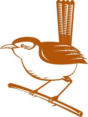 fantail: New Zealand fantail bird  Stock Photo