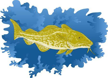 gill: Atlantic cod or Codfish Stock Photo