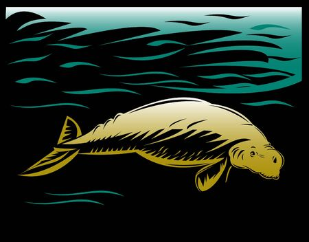manatee: Manatee or dugong