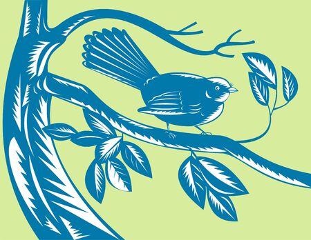 fantail: New Zealand fantail bird on a branch