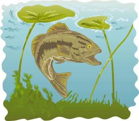 largemouth bass: Micropterus bajo bajo el agua